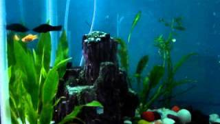 Make A Nice Air Bubble Wall For Your Fish Tank At Home.