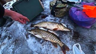 Поставили ЖЕРЛИЦЫ на ХИЩНИКА на ДВУХ ПРУДАХ Рыбалка на ЩУКУ и ПЛОТВУ
