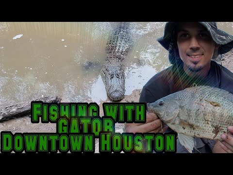 FISHING W/ A GATOR DOWNTOWN HOUSTON BAYOU!!??