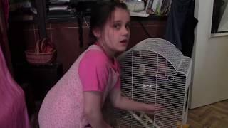 Как ухаживать за попугаем  Уборка клетки 1 серия