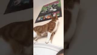 BRUIT D'ESTOMAC DE CHAT 10 MIN VERSION