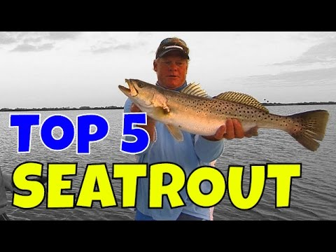 Top 5 Biggest Speckled Seatrout And Best Trout Fishing Lures