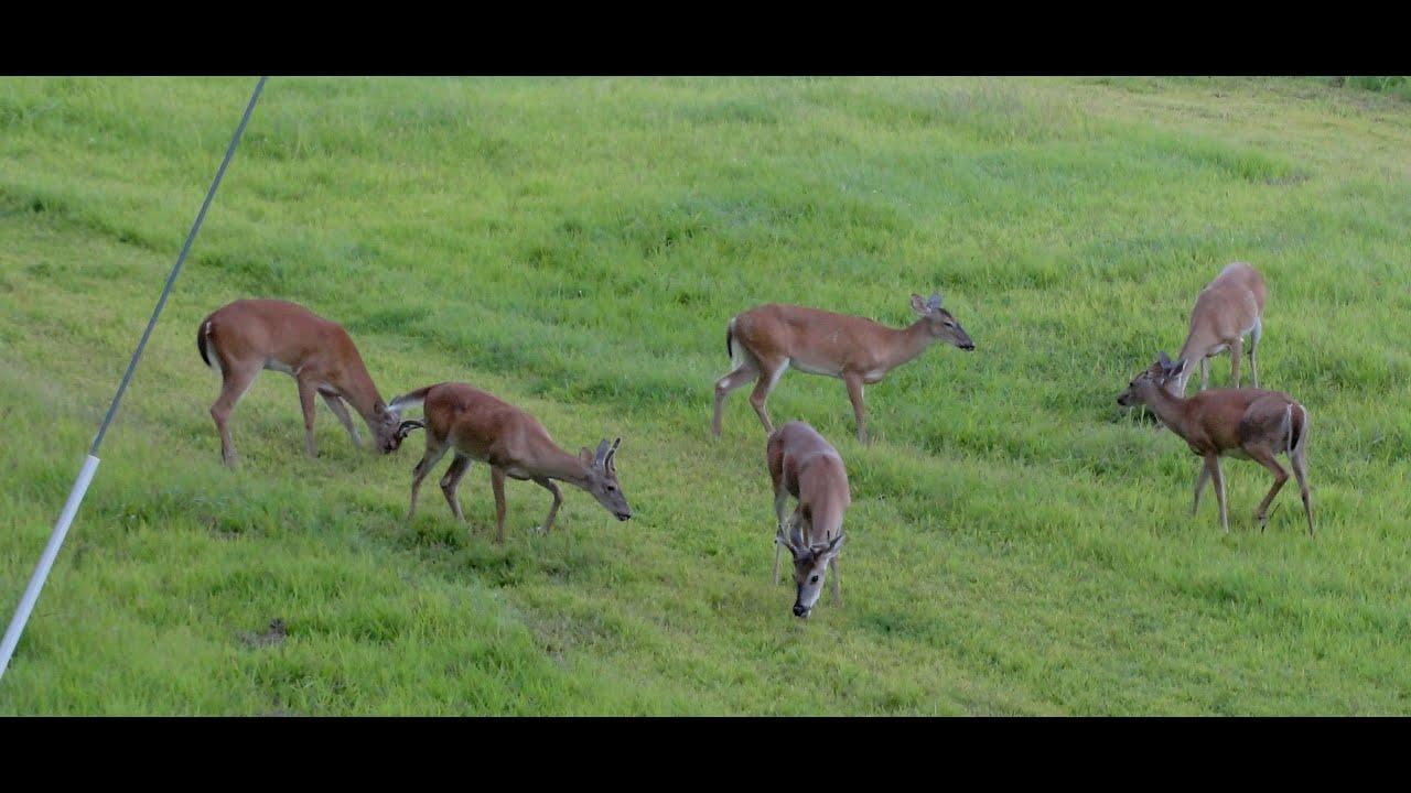 Think, deer lick nature preserve agree, rather