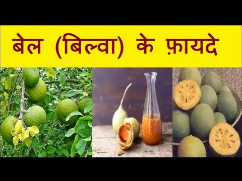 बेल (बिल्वा) के फ़ायदे | Health Benefits of wood apple (Bilwa, Bael patthar juice)