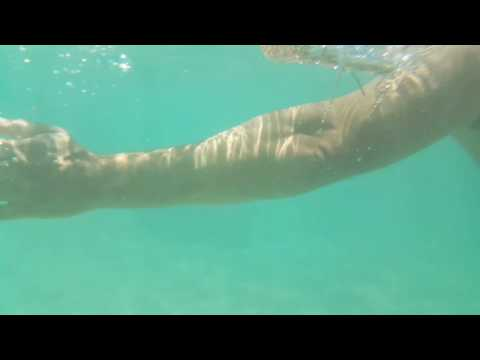 Miami Sunny Island Shark On The Beach June 28.2017 Danger Squalo Tiburon Part 2/2