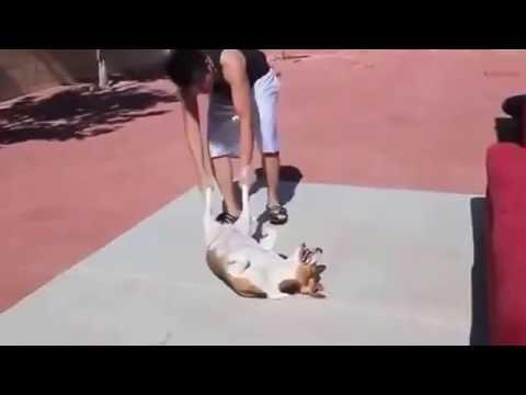 Собаки, которые очень НЕ любят купаться!