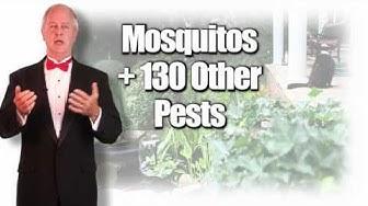 Mosquito Spray Service - Tuxedo Mosquito Control