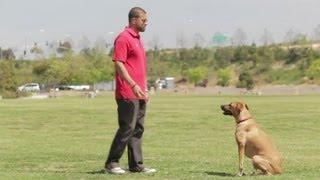 Dogs' Innate Behavior : Dog Behavior & Training