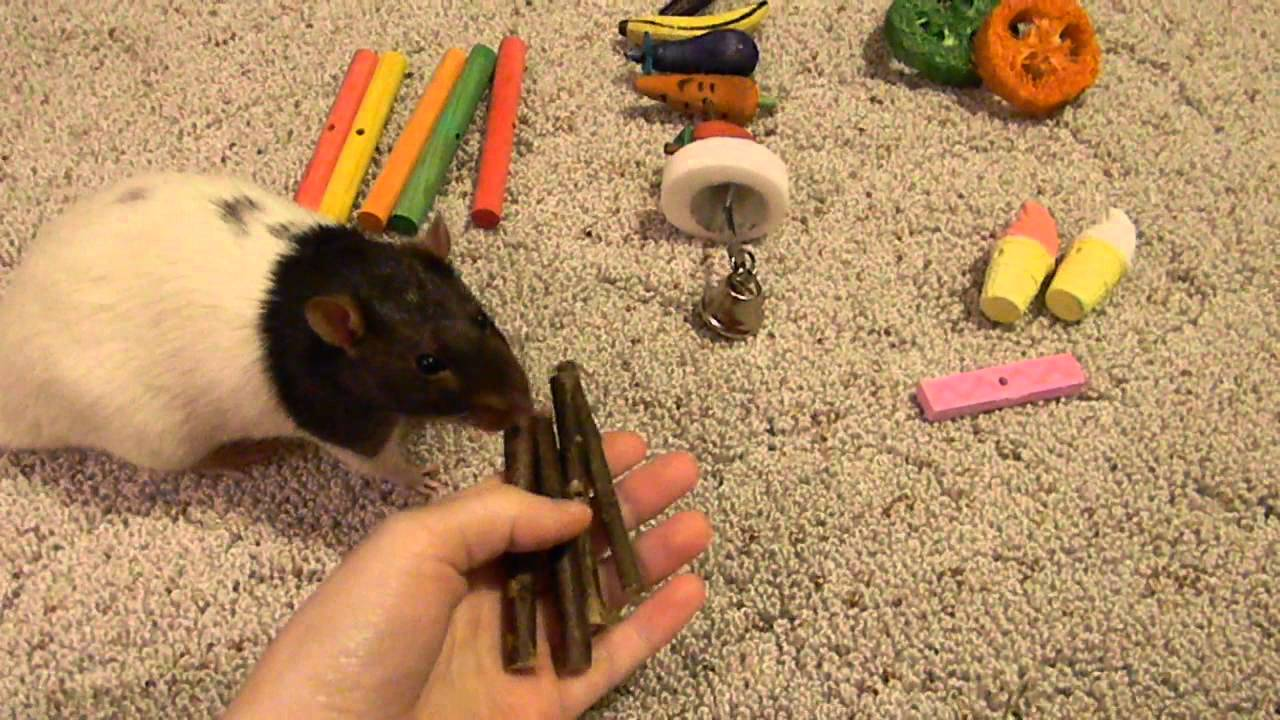 Homemade Toys For Rats 25