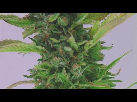 Locations – Sugar Top Buddery | Craft Cannabis Grown in