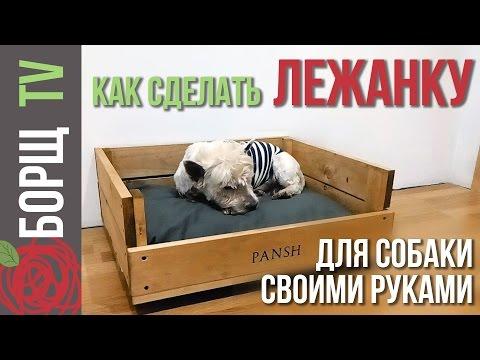 Лежанки для собак как выбрать, где поставить и как
