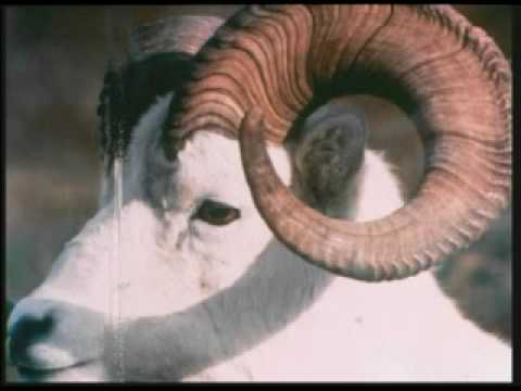 Fibonacci Curves - YouTube