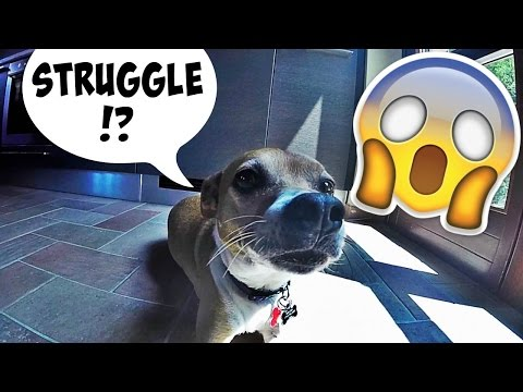 The STRUGGLES of House & Pet Sitting in ITALY! | Daily Travel Vlog 113, Le Marche, Italy, HD