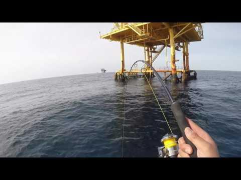 Offshore Galveston Texas Amberjack + GROUPER !!!
