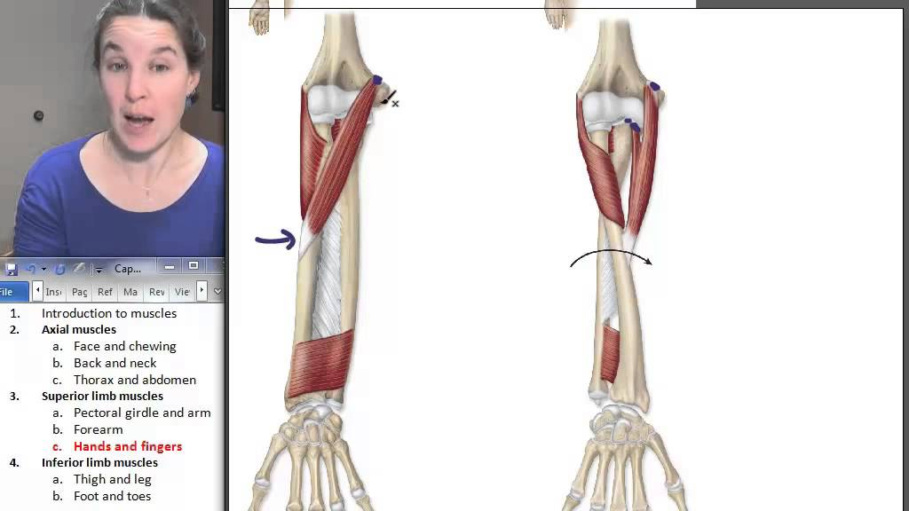 Hand + Finger Muscles ☆ Human Anatomy Course - YouTube
