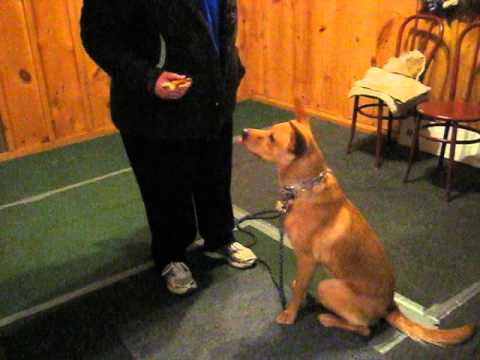 switch command-teaching dogs to give up a toy or bone when offered something of high value!!