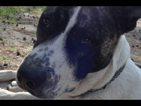Не теряйте друзей или как я нашел потерявшуюся собаку