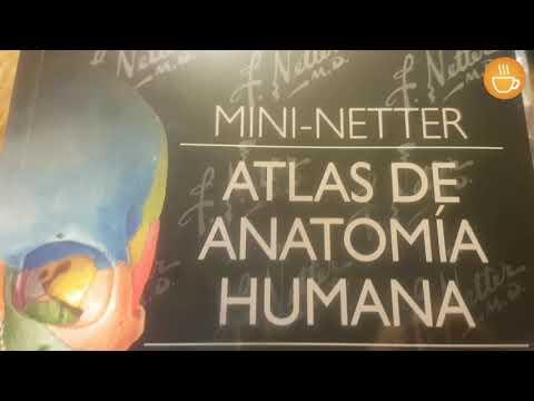 atlas-de-anatomia-humana-/-netter-6ta.-ed.