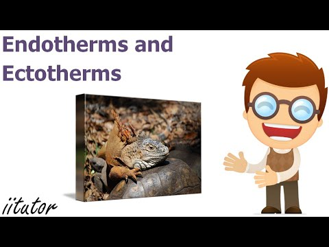 √ Typical Behaviour of Endotherms and Ectotherms | iitutor