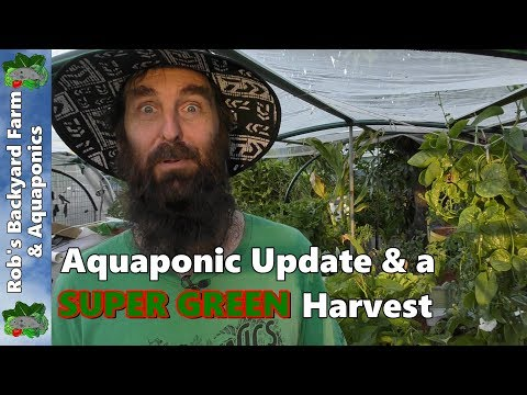 Aquaponic System Update with a SUPER GREEN Harvest