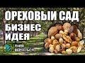 Ореховый сад / Бизнес идея