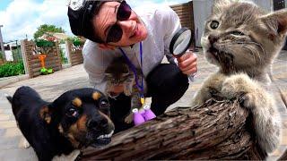 Настя  и история для детей с котенком