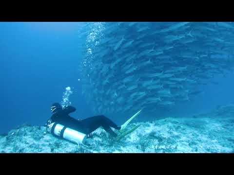Barracuda storm 1@Big fish country/Maratua (23Aug2017)