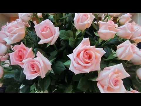 mms čestitke za rođendan Sretan Rođendan Prijateljice Moja :)    YouTube mms čestitke za rođendan