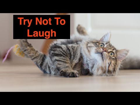 🤣Funniest animals 😻Cats And 🐶 Dogs  Try Not To Laugh   Funny Pet Animals' videos