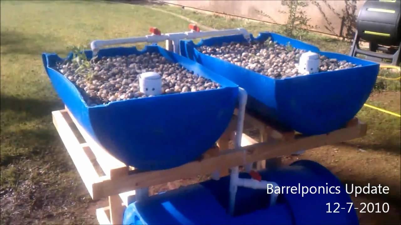 Barrel Aquaponics Update 12-7-2010 - YouTube