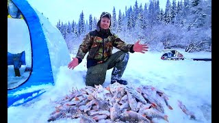 Вот это ДА!!! Попали на жор окуня! Зимняя рыбалка на таёжном озере. Ловим окуня на блесну.