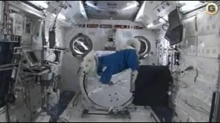 Собака в космосе.