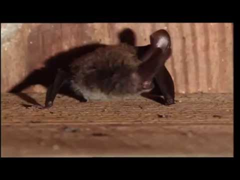 Conservation Connect Series:  Bats