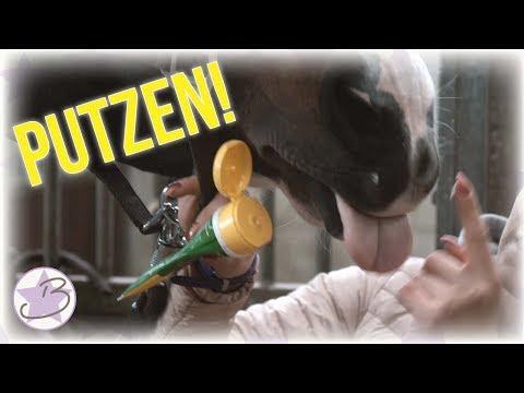 PUTZROUTINE! | Wie werden meine Pferde sauber! | BinieBo
