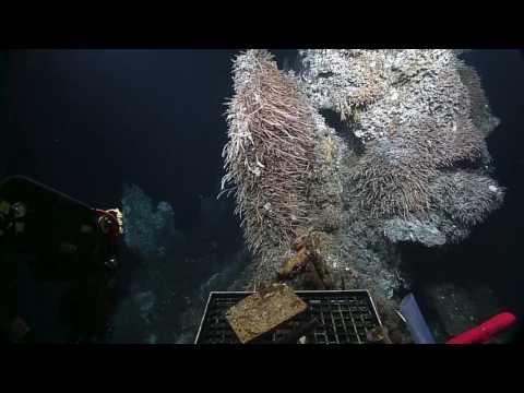 Endeavour Hydrothermal Vents | Nautilus Live