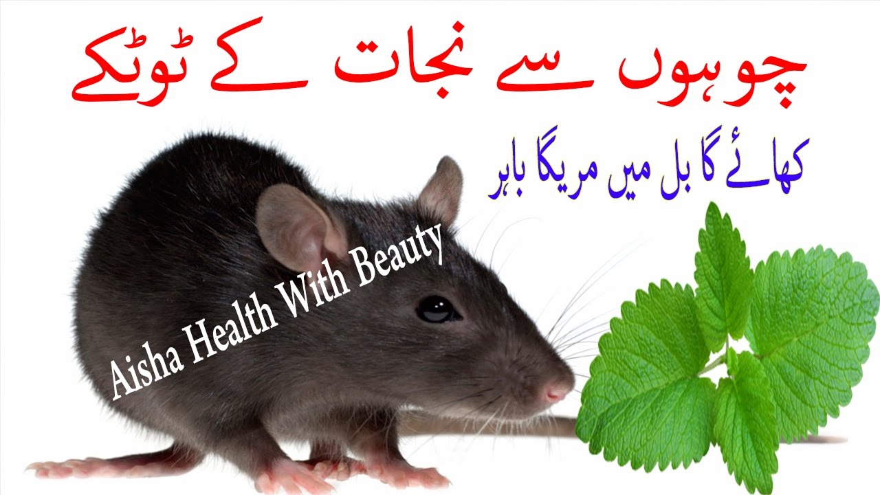 Chuhon Se Nijat Ke Gharelu Aasan Totke - Ways To Kill Rat Naturally