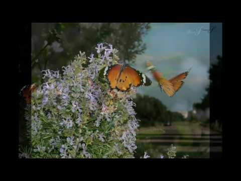 Guy Gaudenèche - PAPILLON/Butterfly - chanson/song