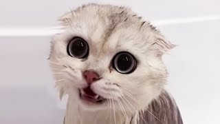 Cats Just Don't Want to Bathe 2020  Funny Cat Bathing Compilation 2020 [Funny Pets]