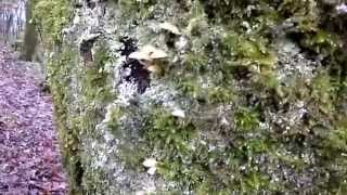 Nature Insights - Micro-Mushrooms, Mosses and Lichens on Tree Bark