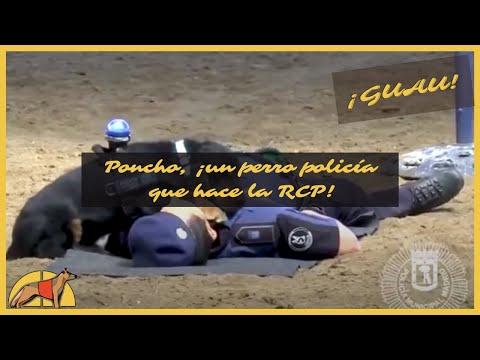 Poncho, o heroe da Policía de Madrid