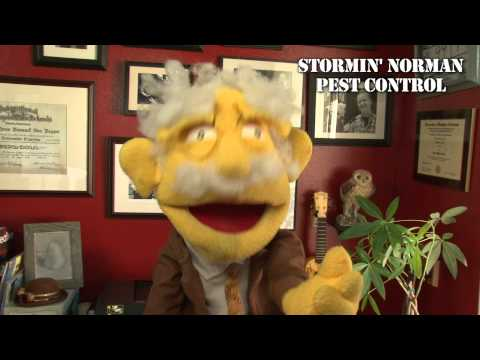 Termites in Arizona  - Stormin' Norman Pest Control
