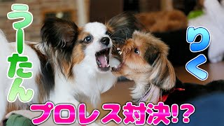 やんちゃなふたりですが、とても仲良しなのです\(^o^)/☆ ~・~・~・...