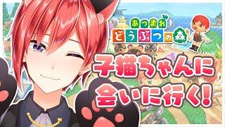 【あつ森】子猫ちゃんの島へバカンスへ🌴#02【星天Game】