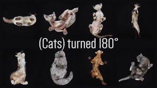 2月22日は猫の日なので、猫を違ったアングルで観測してみた。ガラスの下から撮影した猫たちの新たなる一面