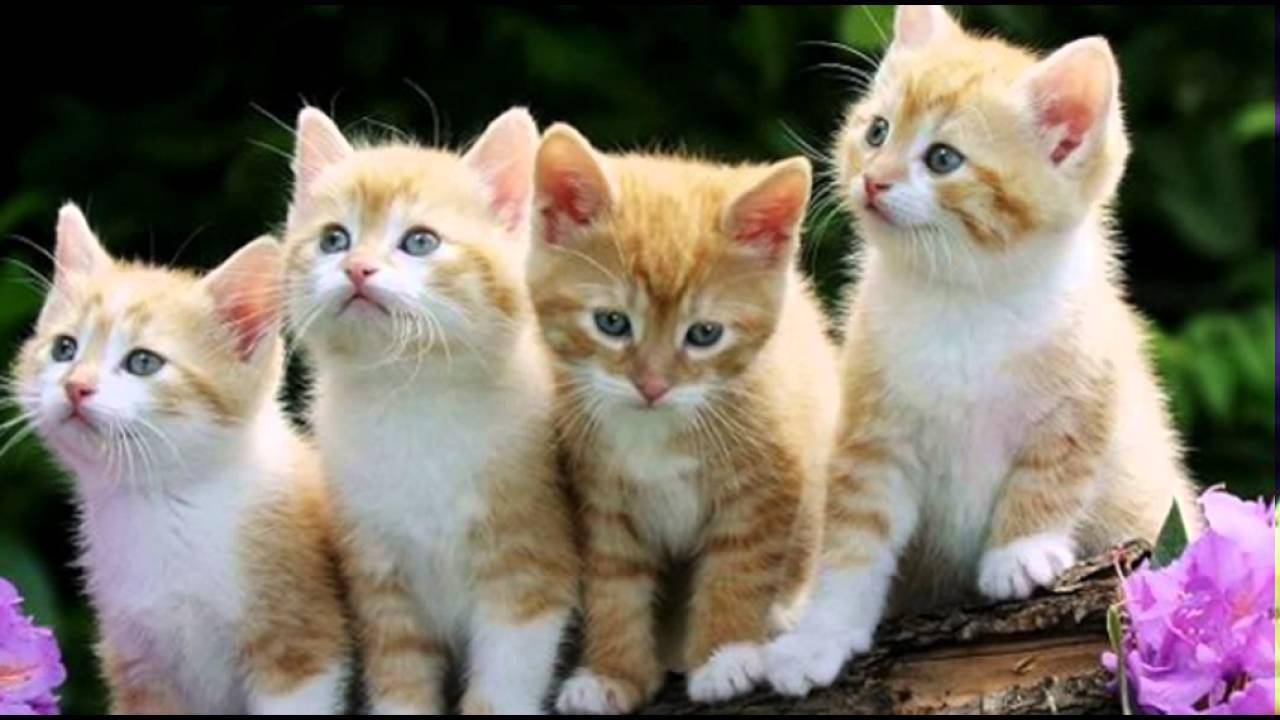 Kucing Lucu - YouTube