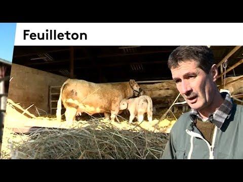 Indre : portrait d'un éleveur de vaches charolaises avant le Salon de l'agriculture