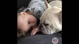 可愛い犬と猫と人間の赤ちゃんの愛くるしい姿をまとめました         ほ...