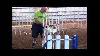 Tika And Linus -- Dca Agility Compettion!