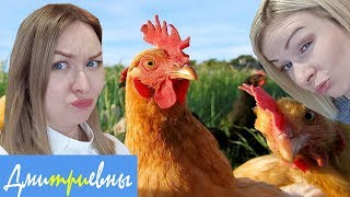 КАТАПУЛЬТА Дмитриевны челлендж