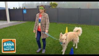 Hunde im Einsatz   Information für Kinder   Anna und die Haustiere   Spezial